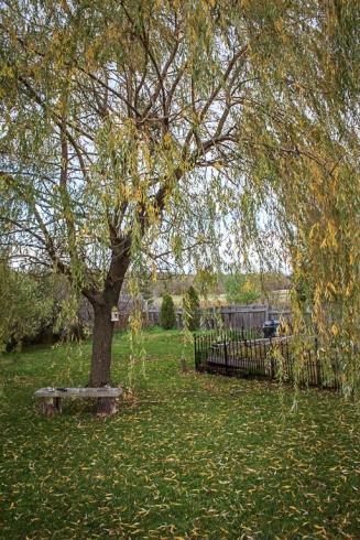 backyard (1 of 1)-6